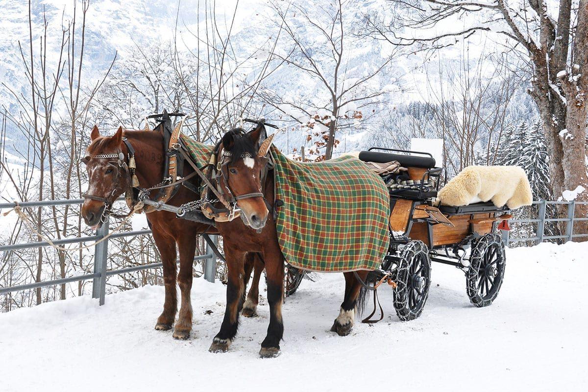 Pferdeschlittenfahrten im Winterurlaub in Forstau, Ski amadé